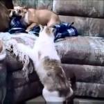 Hunden skäller på katten, men vem är chef?
