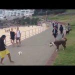 Det hunden gör med bollen är fantastiskt