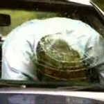 Vad som händer när du krockar utan säkerhetsbälte (video)