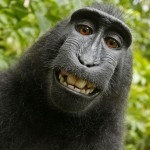 Copyrightbråk om apas selfie-foto